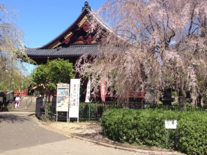 Stunningly beautiful temple, and the cherry blossoms are lingering this spring.